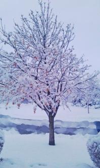 Magestic Snow