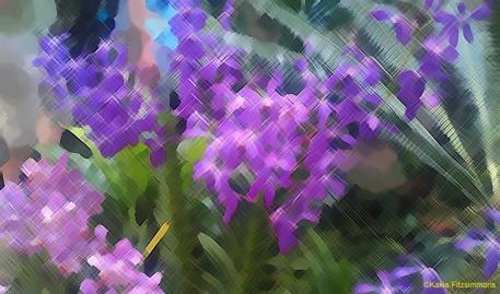 Vibrant_edited-1